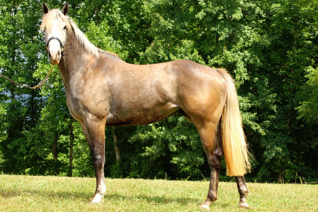 Bold As Brass – SOLD BY LAST FRONTIER FARM